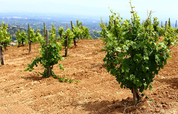 Santa Cruz Mountains - Pinot Noir
