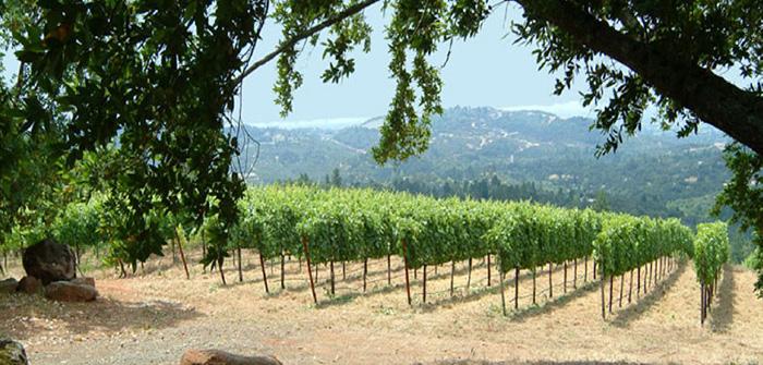 Arnot-Roberts Sonoma County - Cabernet Sauvignon