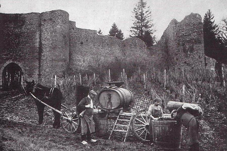 Traubenlese Anfang des 20. Jahrhunderts auf Château d'Arlay