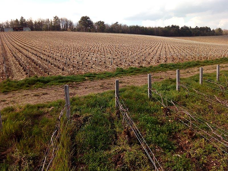 Bodevergleich: Im Vordergrund Biodynamisch bewirtschaftet im hinteren Bereich traditioneller Anbau