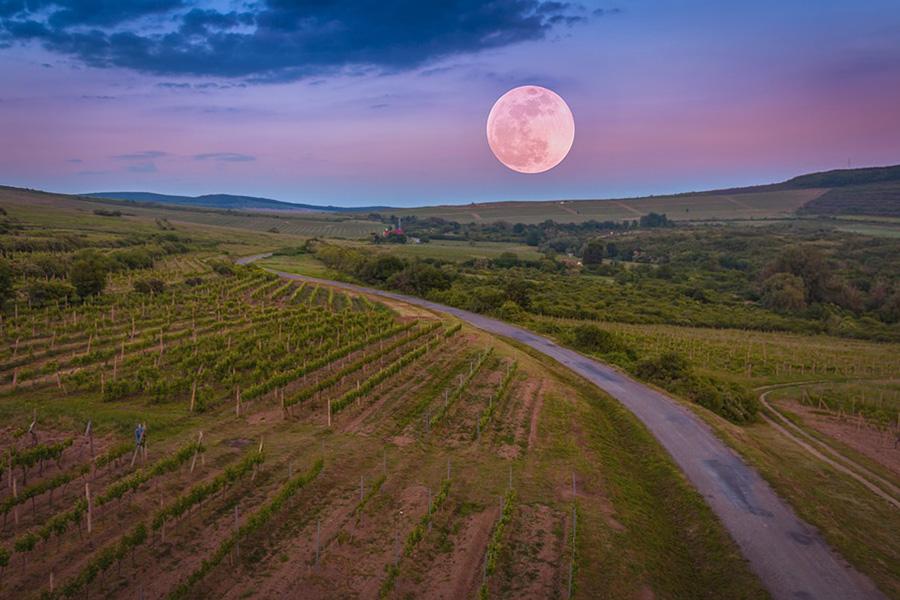 Arbeit im Weinberg nach.Mond- und Gestirnsphasen