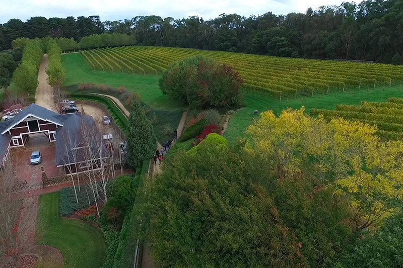 Ocean Eight -Weinbau in Australien nach europäischem Vorbild