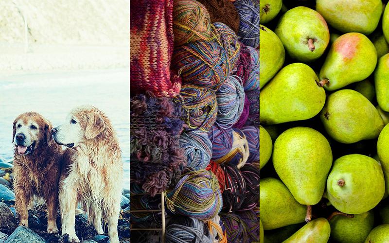 So kann ein Chenin Blanc riechen: Nasser Hund, Alter Wollpulli oder zermatschte Birne