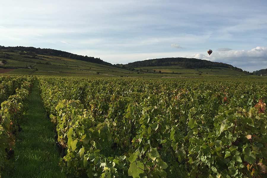 Die Weingärten im Burgund gehören zu den teuersten der Welt