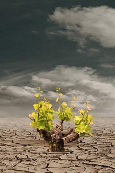 Wein in Zeiten des Klimawandels