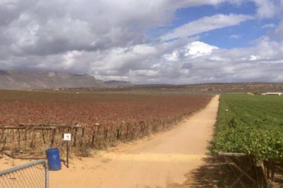 Ausgetrockneter Weingarten