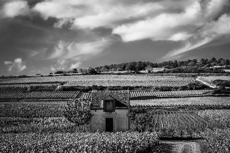 Schwarz-weiß Bild der Burgunder Weinlandschaft