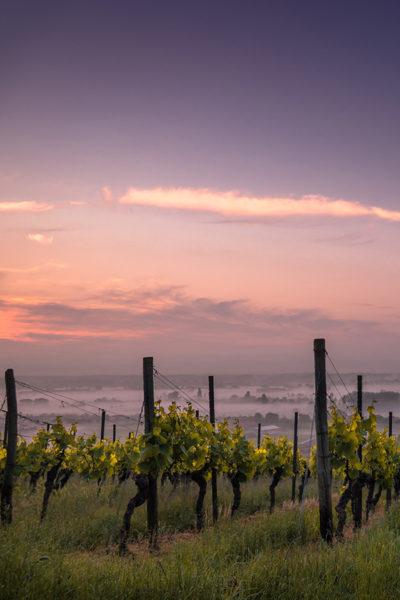 Was bedeutet eigentlich »bio« im Weinbau?
