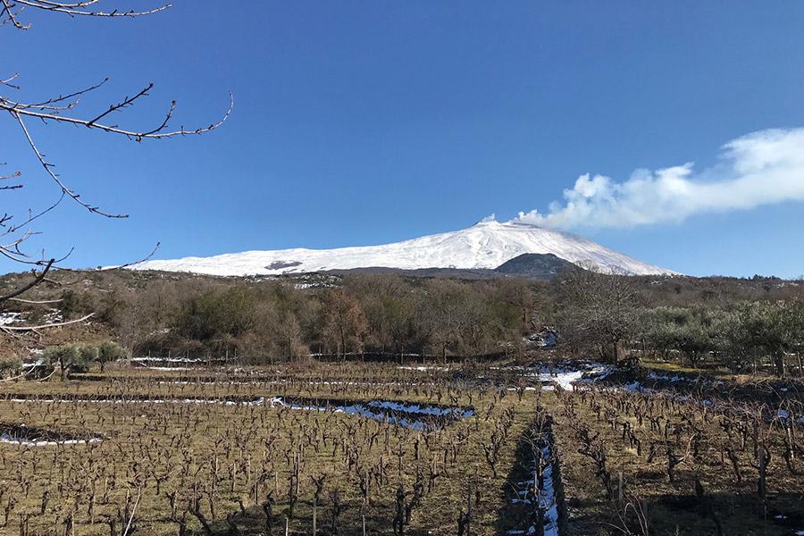 Weingarten mit Ausblick auf den Ätna