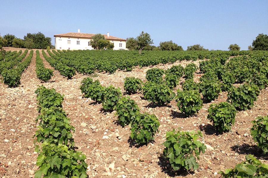Weingarten Vigna Grande von Montecarrubo