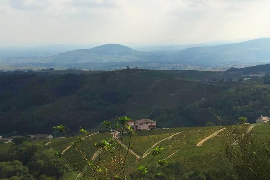 Diorit geprägtes Weinbaugebiet