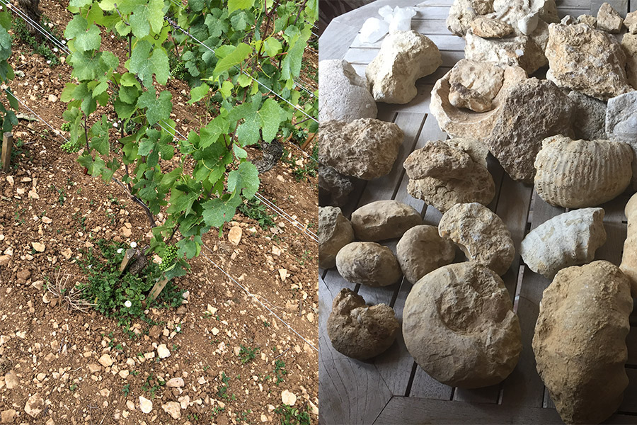 Terroir Burgund