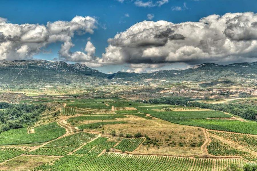Weinreben in der Rioja