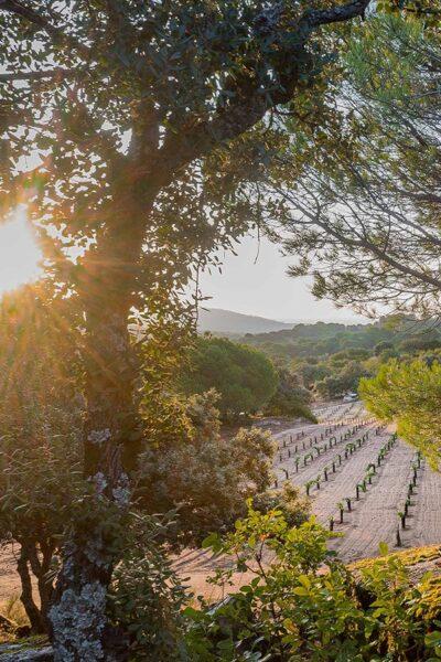 Wein aus Spanien und die stille Revolution