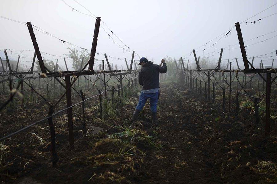 Weinbau ist harte Arbeit