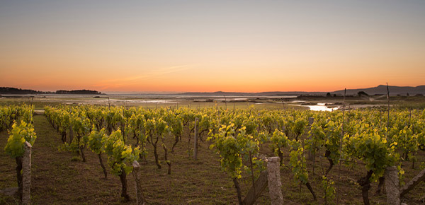 Fento Wines - Eulogio Pomares