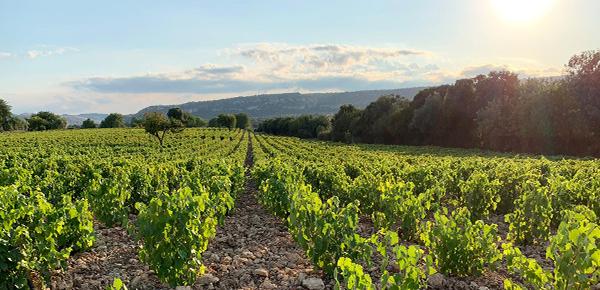 Montecarrubo Wine